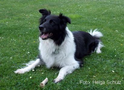 Jahnstr-2016-Hund-Luna